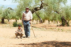 The Olive Tree promotional photo